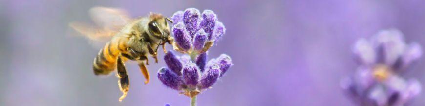 Pour les abeilles