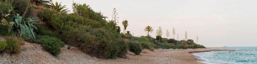 plantes de bord de mer rochers et galets paysagers le jardin de bord de mer. Black Bedroom Furniture Sets. Home Design Ideas