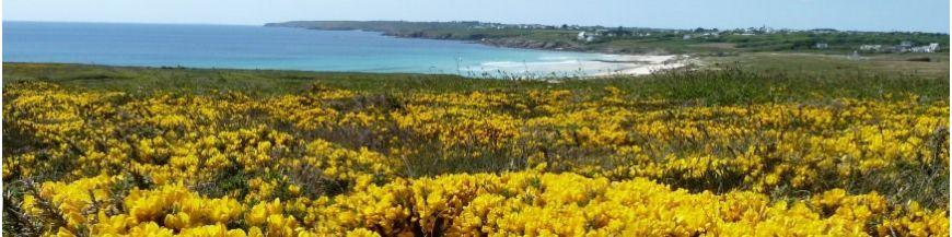 Plantes de bord de mer, vent et embruns, sur la cote sud de Bretagne ...