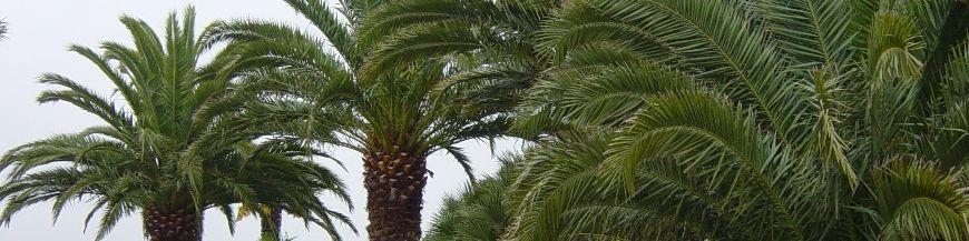 Palmiers et méditerranéen